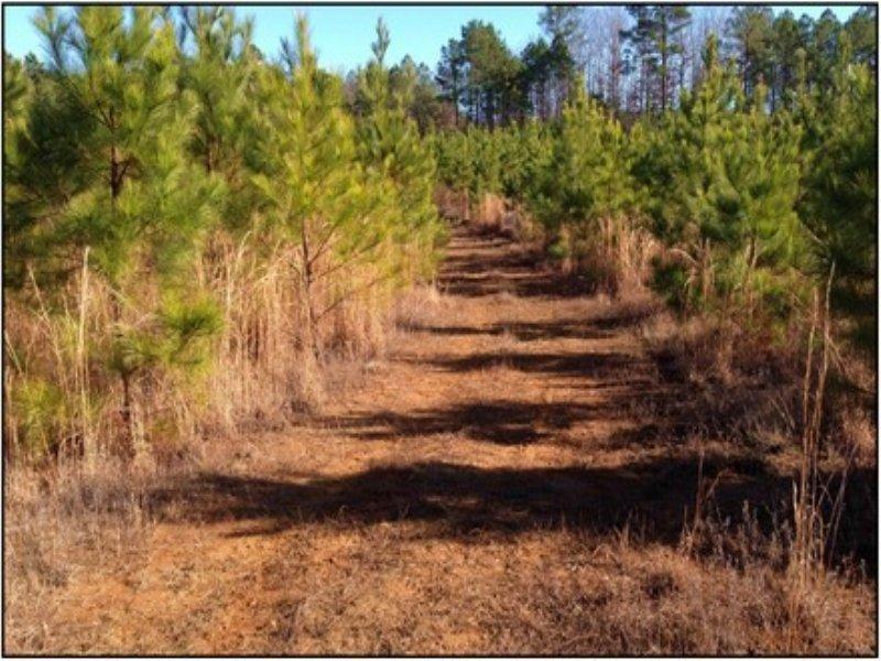 80 Acres In Yalobusha County : Velma : Yalobusha County : Mississippi