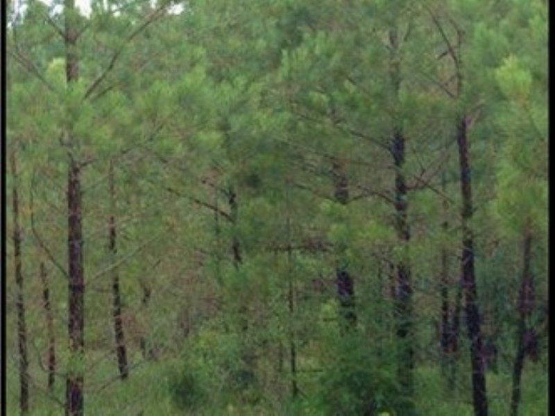 46.6 Acres In Attala County : Kosciusko : Attala County : Mississippi