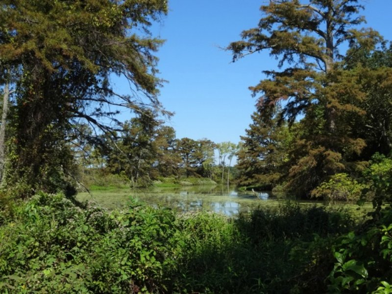 334 +/- Duck & Deer Hunting Lease : Cotton Plant : Woodruff County : Arkansas