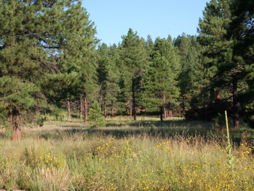 Arizona Forested Cabin Site : Alpine : Apache County : Arizona