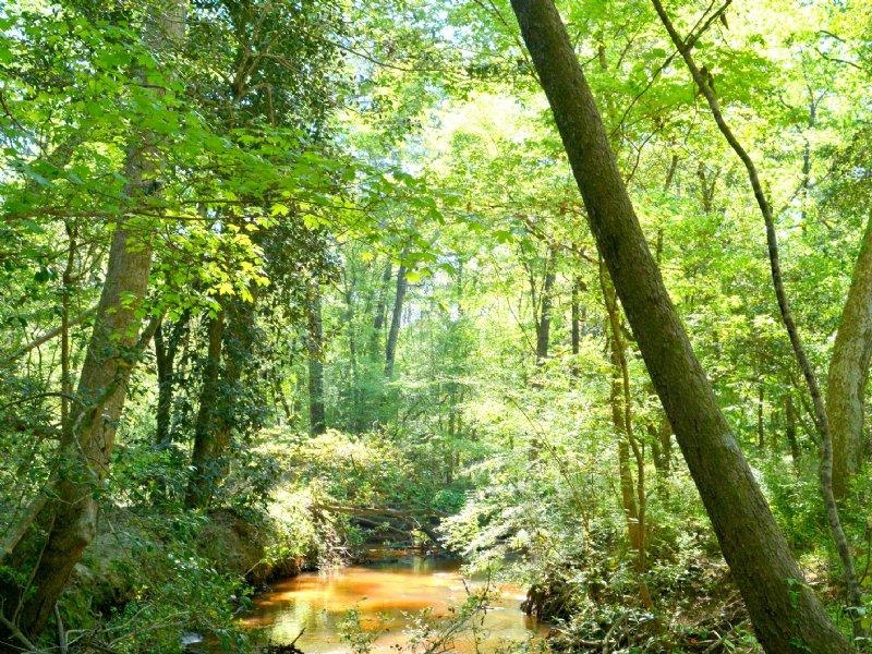 Indian Pines : Cairo : Grady County : Georgia