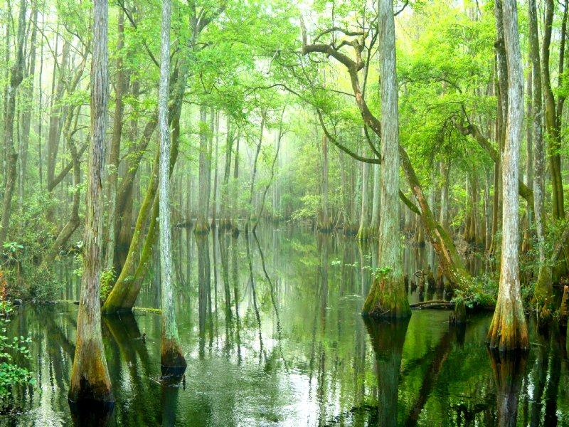 Little Aucilla Annex Of Honey Lake : Greenville : Madison County : Florida