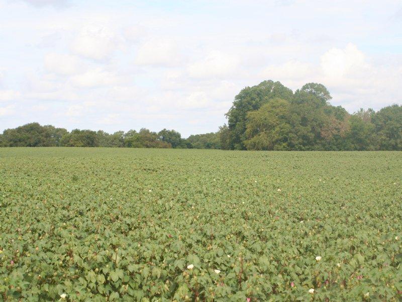 Springhill Farm B - 238 : Sylvester : Worth County : Georgia
