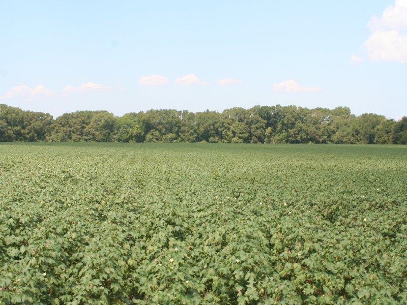Springhill Farm D - 165 : Sylvester : Worth County : Georgia