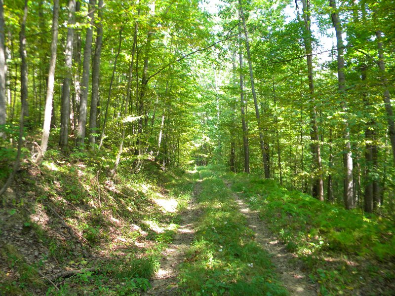 Cheap Hunting Land 103 Acres : Willing : Allegany County : New York