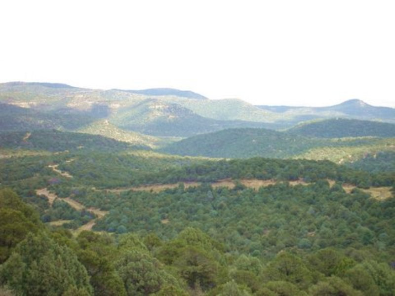 Picketwire Ranch 191 Acres : Trinidad : Las Animas County : Colorado