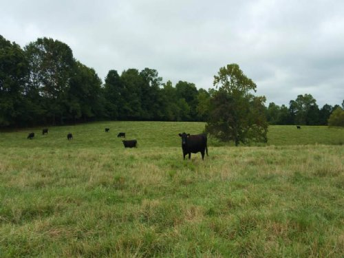 47+/- Acre Cattle Farm Tyus : Bowdon : Carroll County : Georgia
