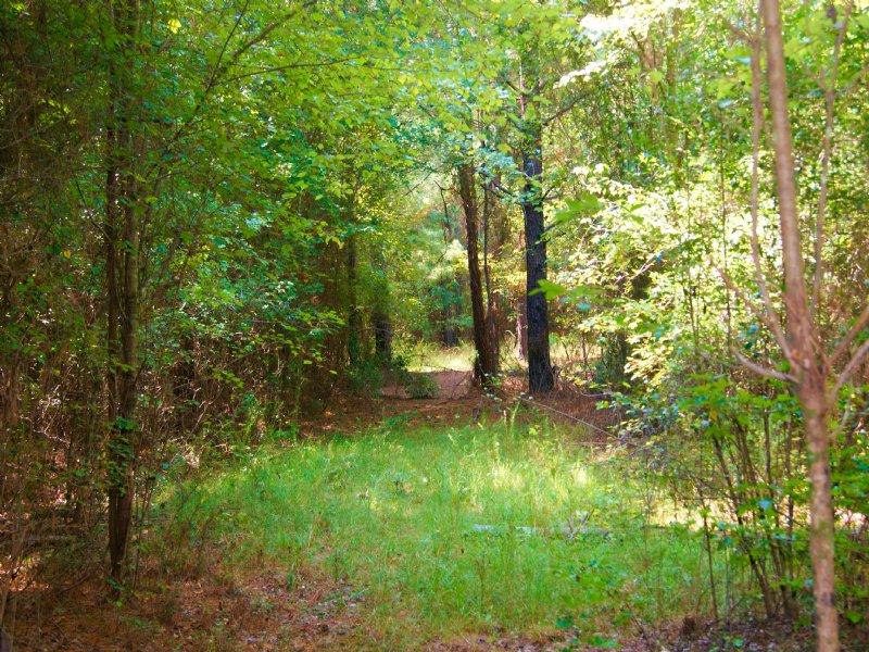 The Washington Camp Tract : Sylvania : Screven County : Georgia