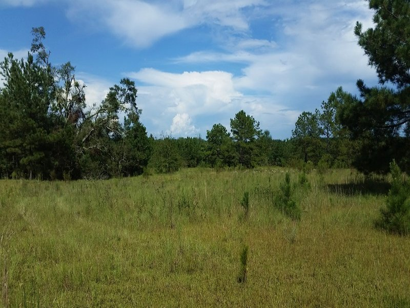 Foster Creek Hunting Tract : Headland : Henry County : Alabama