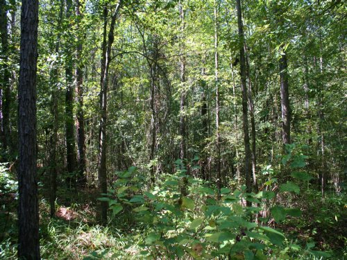 Dozier Rd, 24+ Acres : Appling : Georgia