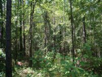 Dozier Rd, 24+ Acres : Appling : Appling County : Georgia