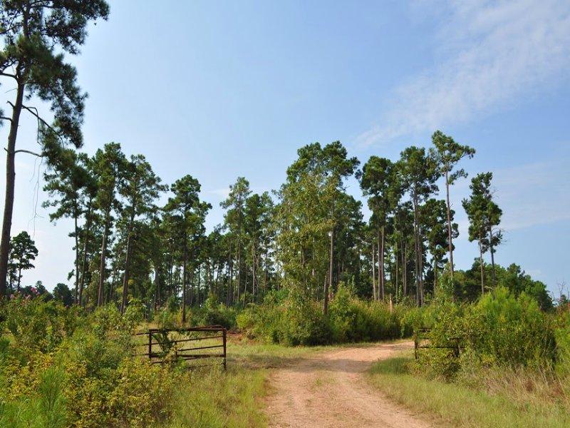 100 Acres Off Fm 230 : Trinity : Walker County : Texas