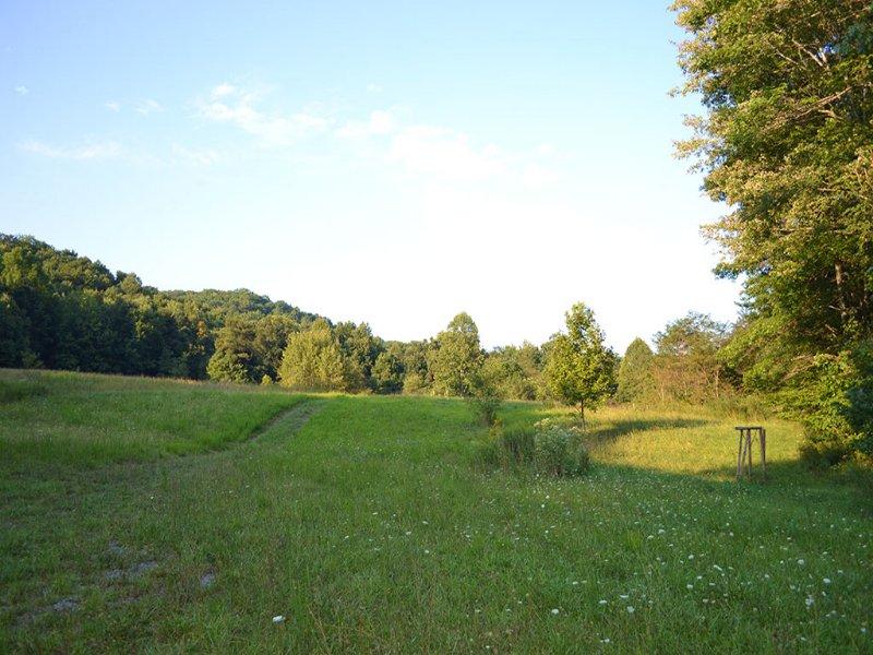 100± Acres Cove Creek Area : Tazewell : Tazewell County : Virginia