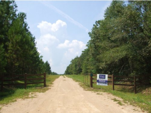 Hunting And Timber Tract : Chattahoochee : Gadsden County : Florida