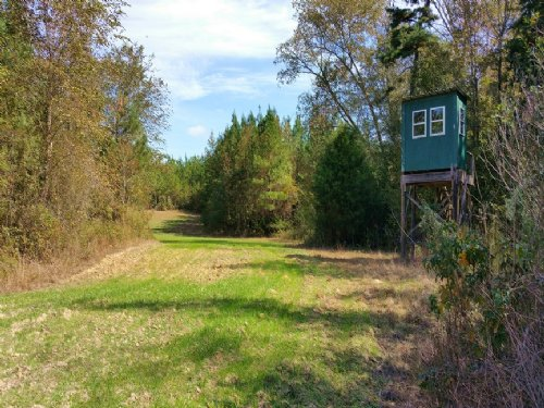 284 Acres : Clayton : Barbour County : Alabama