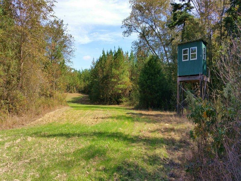 284 Acres : Clayton : Barbour County : Alabama