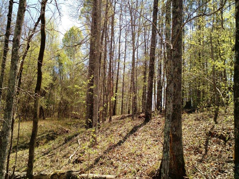 Reduced Mathis Road - 24.302 Acres : Haddock : Jones County : Georgia