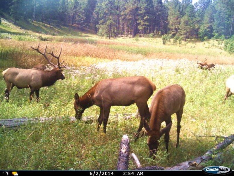 Elk Retreat : Sundance : Crook County : Wyoming