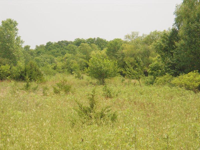 Harveyville Bottomland : Harveyville : Wabaunsee County : Kansas
