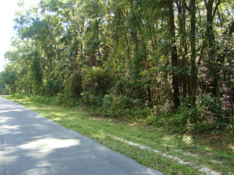 2.91 Acre Wooded Lot 770810 : Old Town : Dixie County : Florida