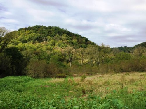 81.5 Acres With Building Sites : Ferryville : Crawford County : Wisconsin