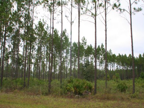 5.86 Acres, Deep Creek Plantation : Bryceville : Nassau County : Florida