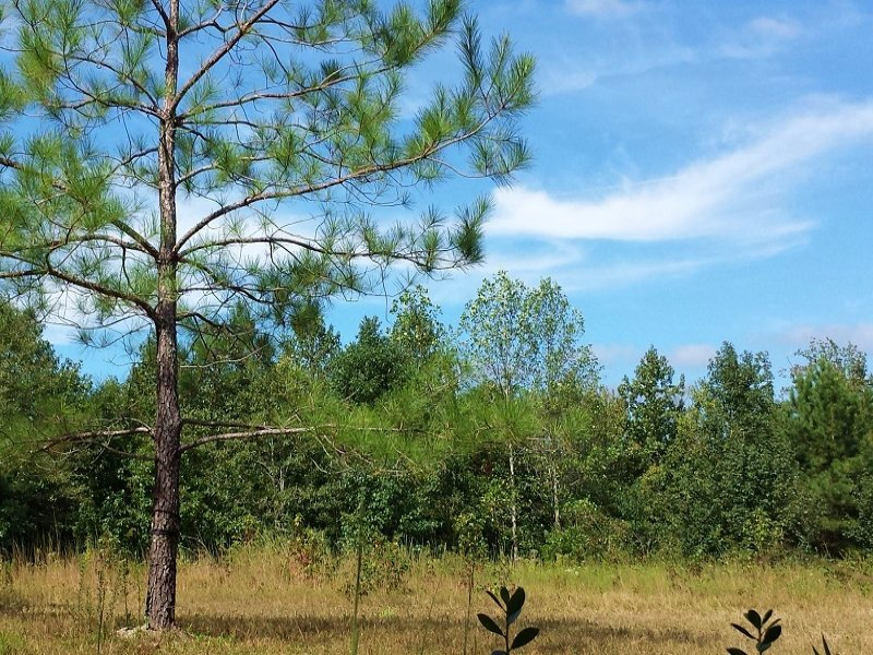 Secluded Hunting Homesite : Wallace : Duplin County : North Carolina