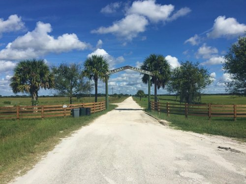 Willaway Cattle Ranch : Okeechobee : Florida