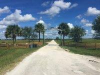 Willaway Cattle Ranch : Okeechobee : Okeechobee County : Florida