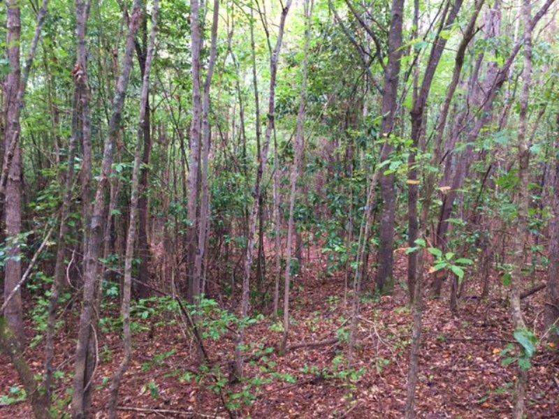 Magnolia Shores Road Tract : Lapine : Crenshaw County : Alabama