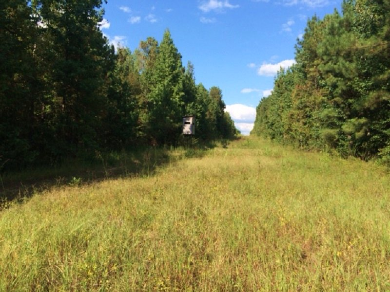 Timber & Hunting Acreage : Moundville : Hale County : Alabama