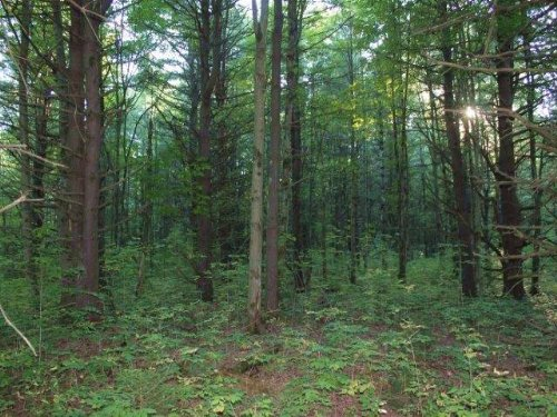 Land Bordering State Forest 112 Ac : Root : Montgomery County : New York