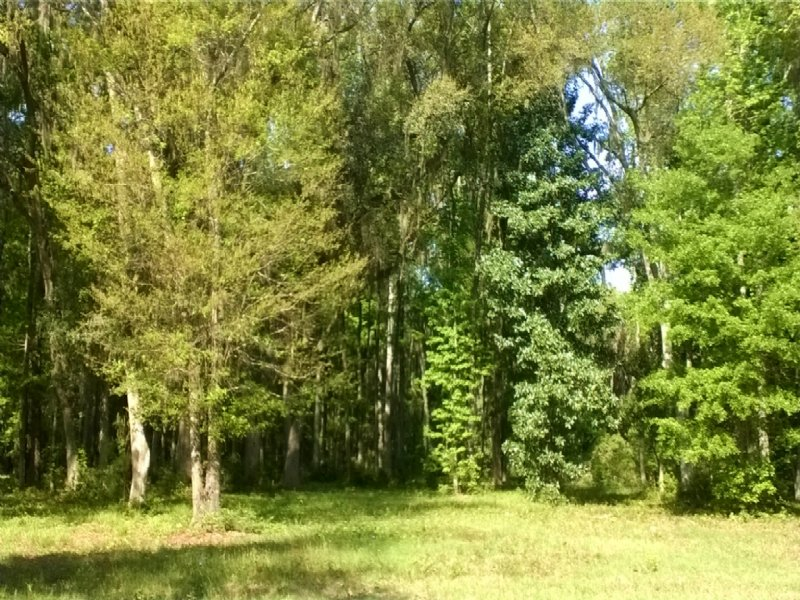 4.6 Acres Nice Wooded Lot : Meridian : McIntosh County : Georgia
