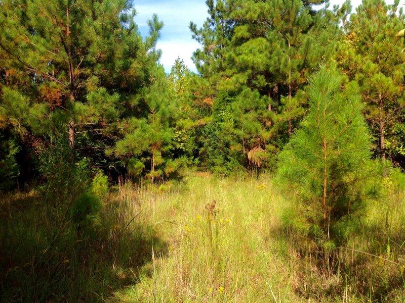Blackstock Hunting Land : Blackstock : Chester County : South Carolina