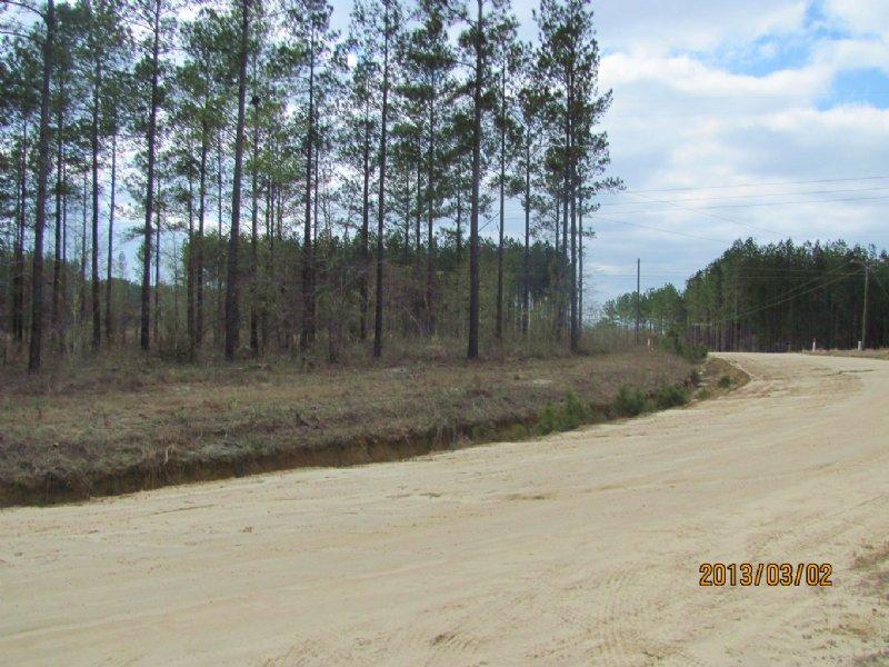 38 Acres For Minifarm : Lyons : Toombs County : Georgia