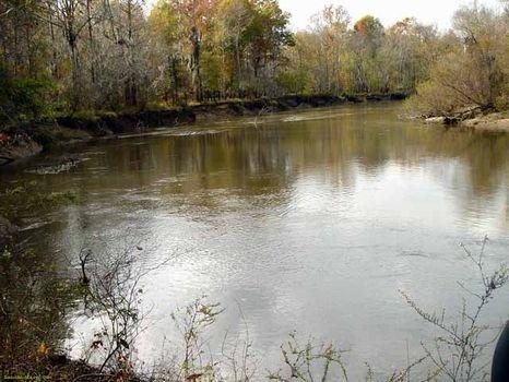 93 Acres | Georgia River Land : Abbeville : Dodge County : Georgia