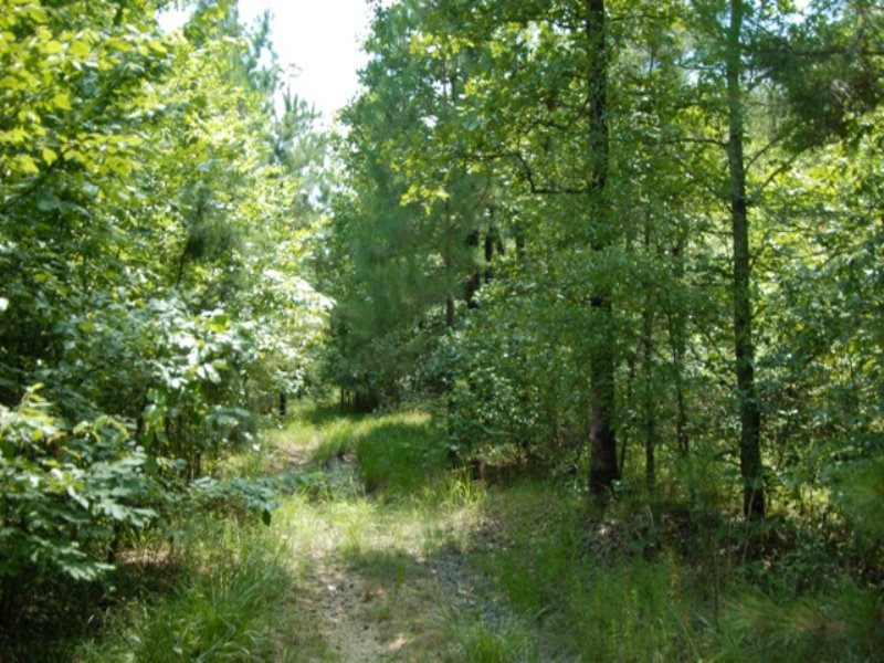 Deer Hunting Timberland For Sale : Redfield : Jefferson County : Arkansas