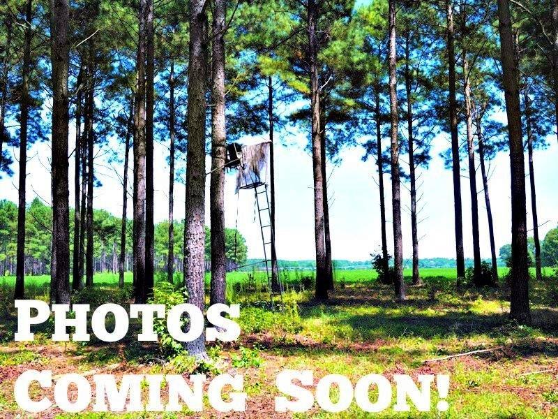 Brannen Hodges : Statesboro : Bulloch County : Georgia