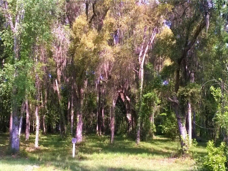 Nice Wooded Lot : Meridian : McIntosh County : Georgia