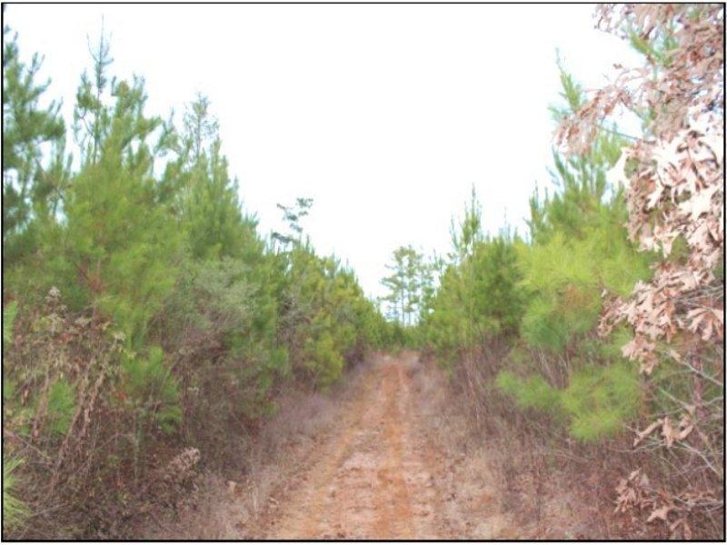 70.40 Acres Undeveloped Land :  : Oktibbeha County : Mississippi