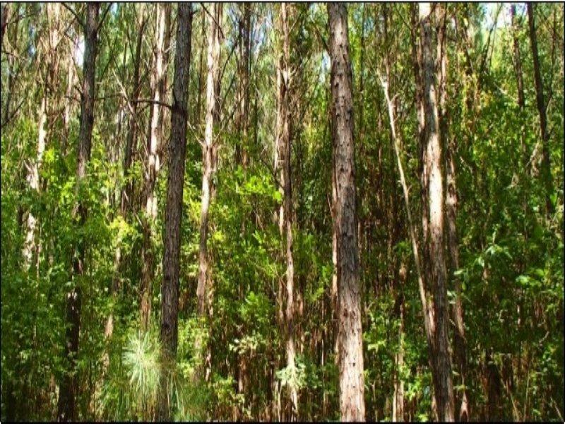 22.00 Acres Hunting Land : Starkville : Oktibbeha County : Mississippi