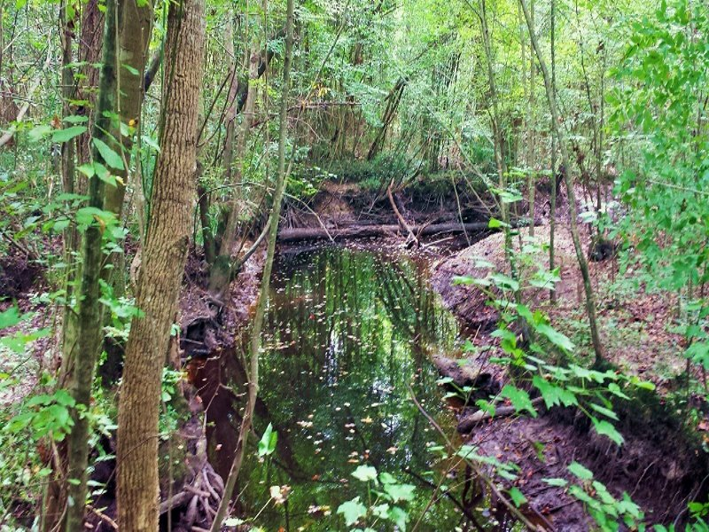 Hunting & Rec Land With Creek : Burgaw : Pender County : North Carolina
