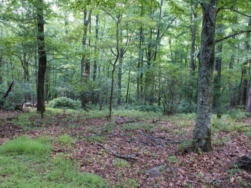 Lot # 106 Blue Ridge Mountain Tract : Independence : Grayson County : Virginia