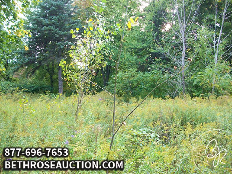 Absolute Land Auction : Flint : Genesee County : Michigan