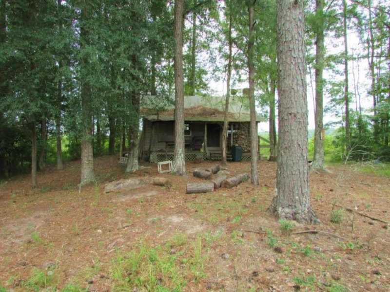 153.00 Acres Hunting Land, Timber : Hickory : Newton County : Mississippi