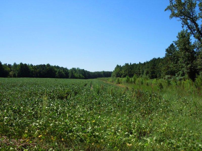 Daniels-koentop Tract - 25 Acres : Castalia : Franklin County : North Carolina