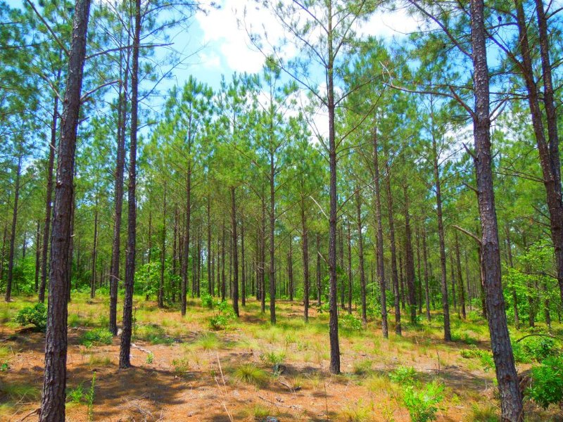 Lupien Revocable Trust Tract : Jackson Springs : Moore County : North Carolina
