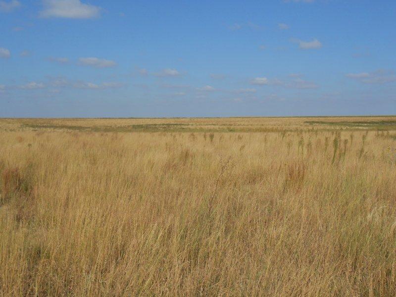 Grant County Crp & Grass : Ulysses : Grant County : Kansas