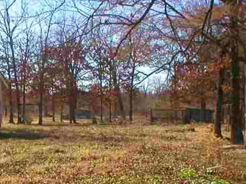 6 Acres (#29489) : Detroit : Red River County : Texas