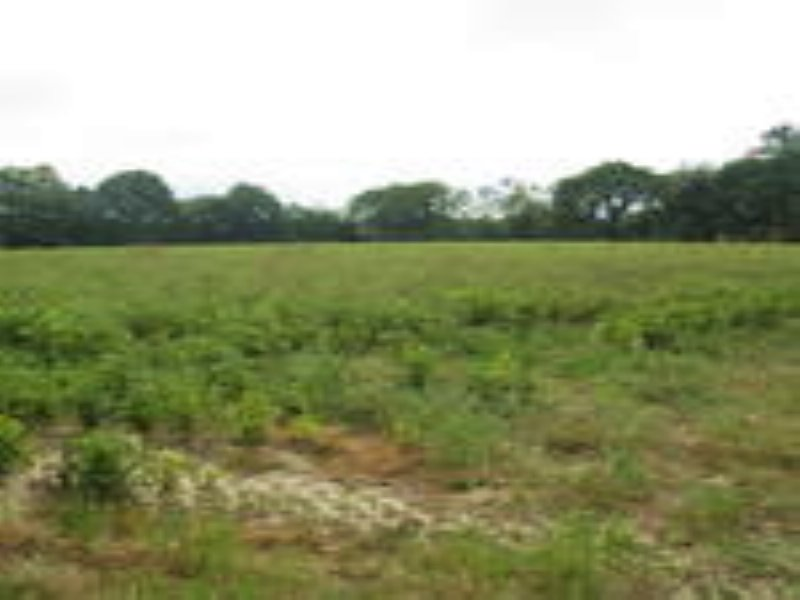 67 Acre Minifarm With Options : Alma : Bacon County : Georgia